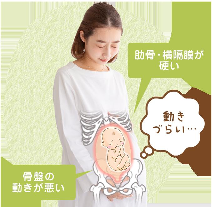 肋骨・横隔膜が硬い、骨盤の動きが悪い